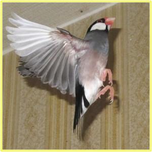 鳥の風切羽